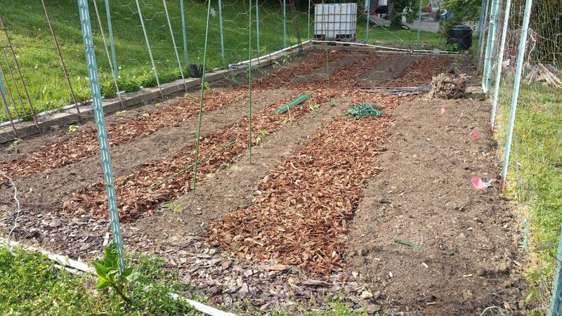 Hey, a gardening forum! We like to grow Veggies-2016-04-18-4-.jpg