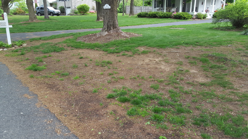 Help - My Lawn, Picture Enclosed-20160518_074844.jpg