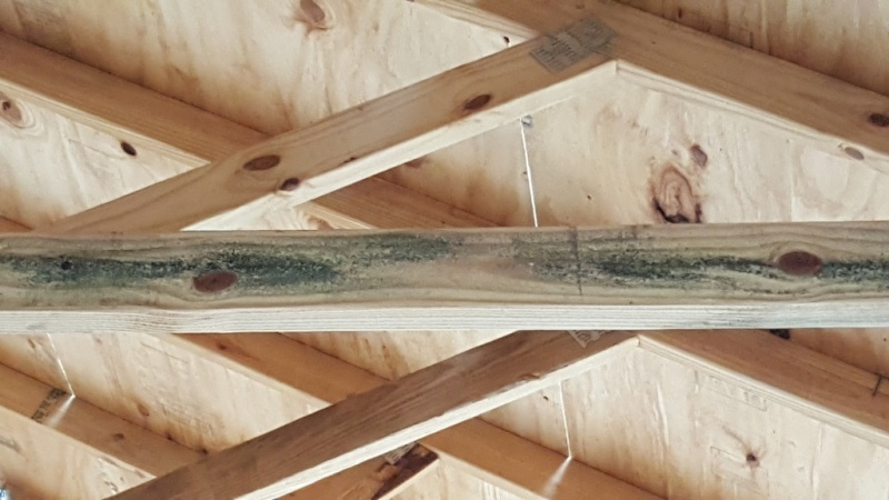 Moldy Trusses framing Wood Roofing Siding DIY Home Improvement