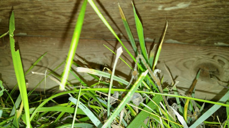 Repairing bottom of shed walls-20160723_112345_1469382698392.jpg