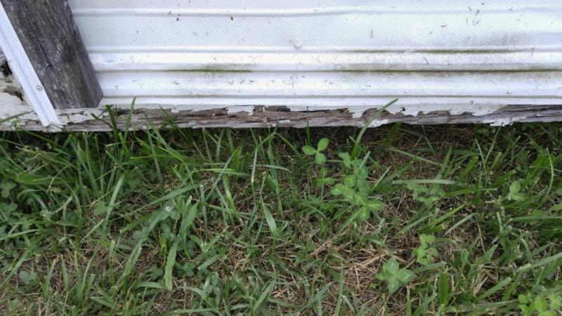 Repairing bottom of shed walls-20160723_112404_1469382638047.jpg