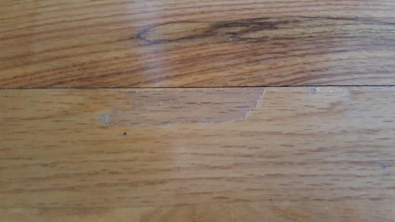 Touch up Hardwood floors?-20160828_112805.jpg