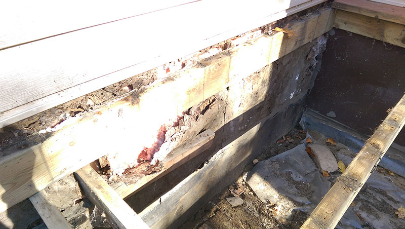 Water damaged exterior wall-2017-10-20-12.35.24.jpg