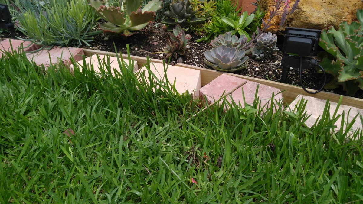 How to block grass and weeds-20180528_120022_1527528711623.jpg