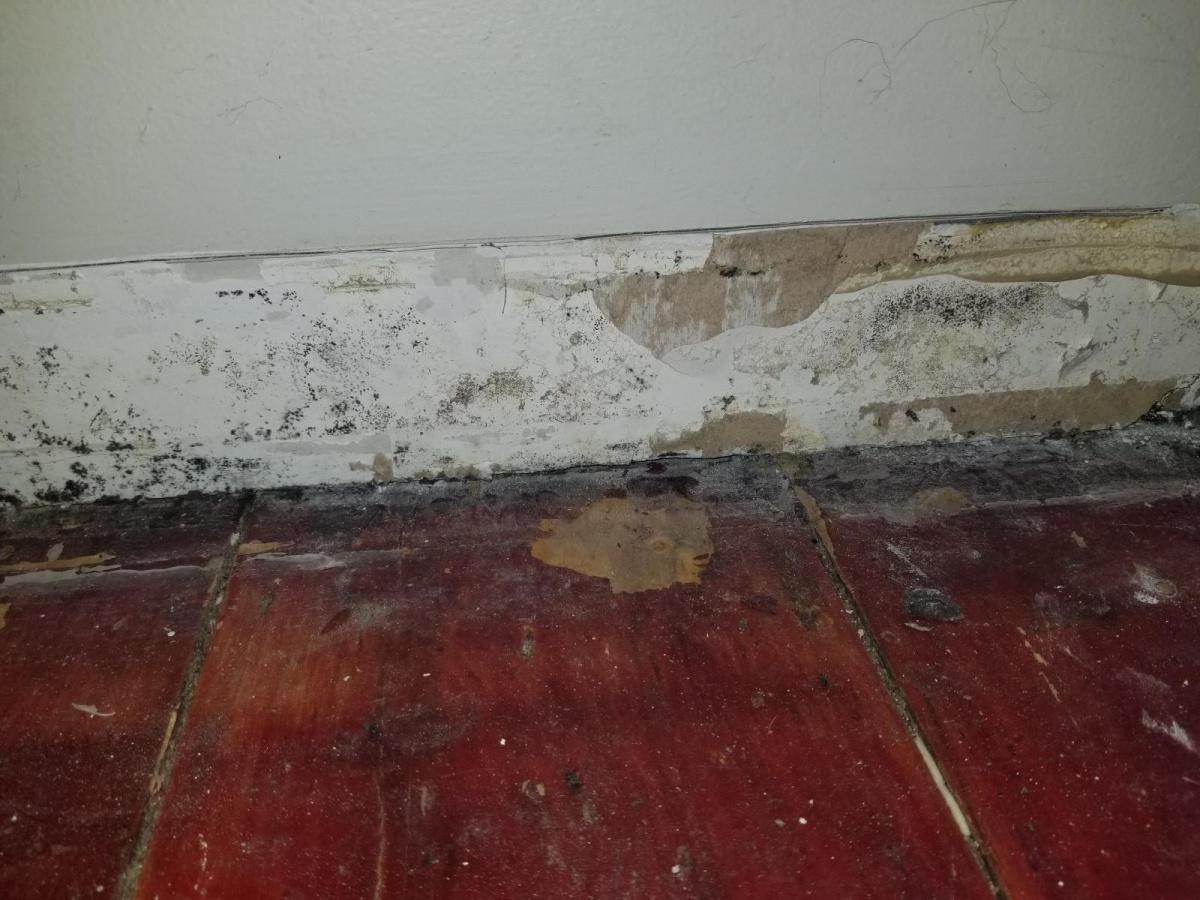 Mold behind baseboard-20180608_132243_1528479268277.jpg