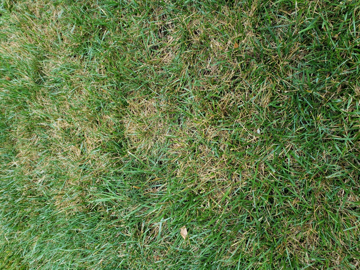 What's going on with this lawn?-20180713_082415.jpg