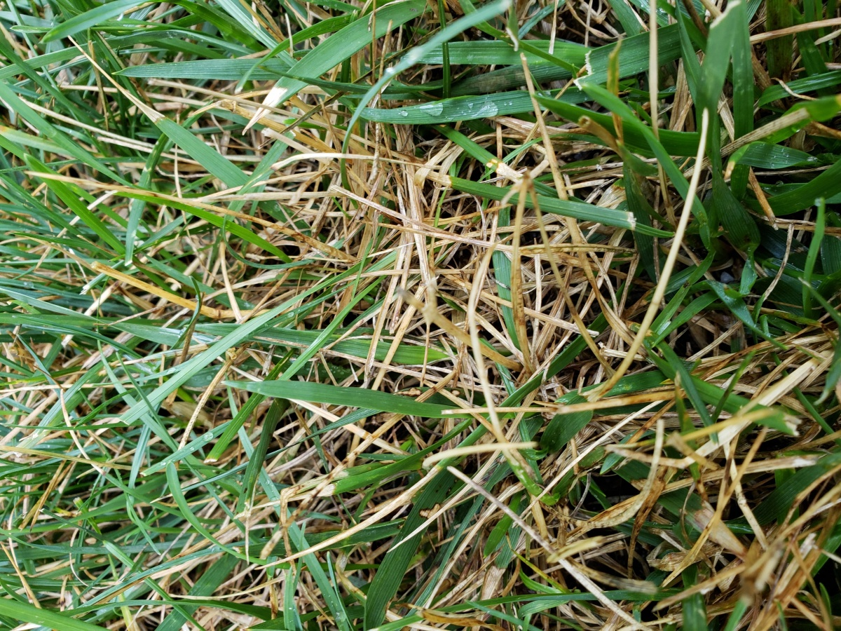 What's going on with this lawn?-20180713_082440.jpg
