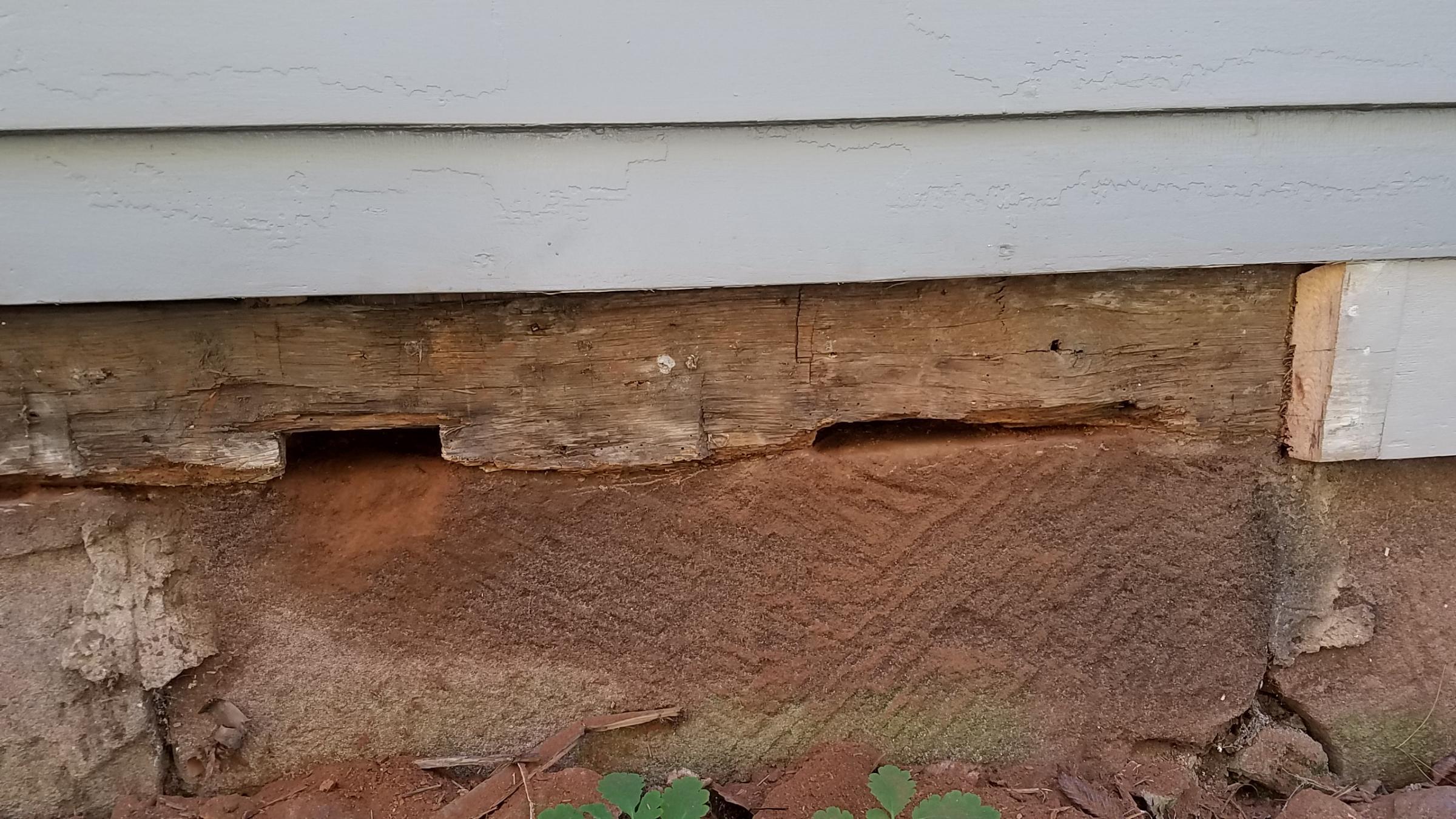 Sill Plate Damage / Repair-20181020_160349_1540071774208.jpg