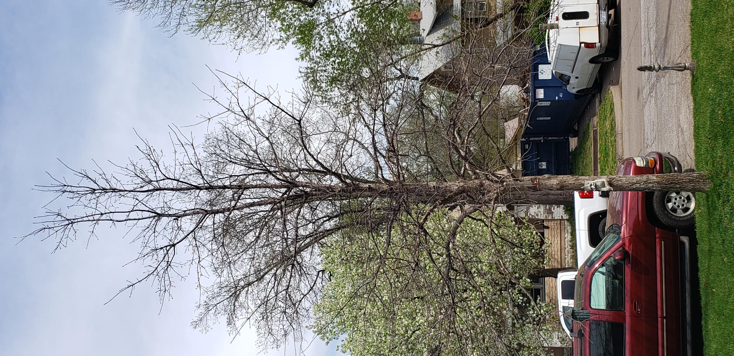 Tree pruning-20190409_151724_1555324927140.jpg