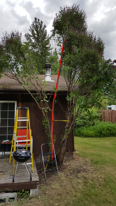 Pleaching very mature lilac - To graft, or not to graft?-20190610_192712sm.png