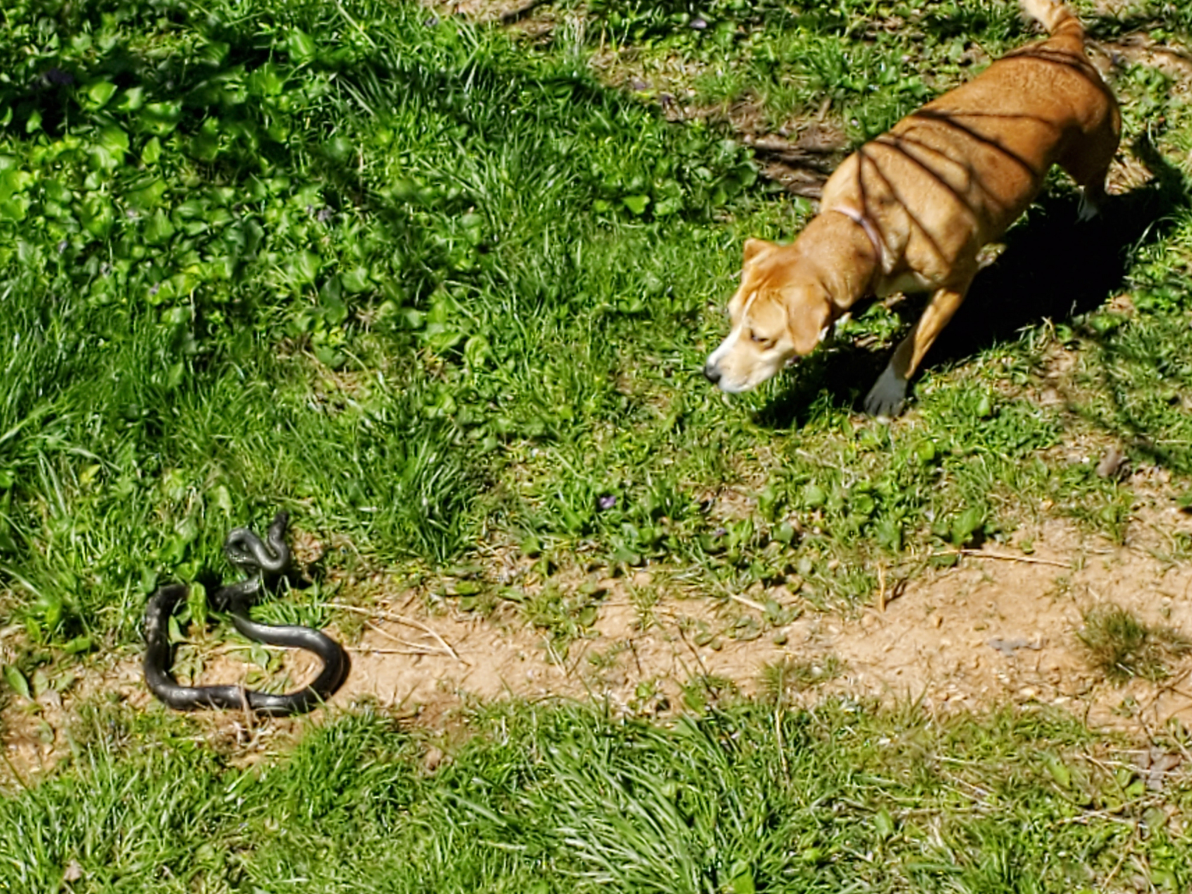 Catching a snake-20200405_113005.jpg