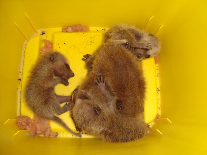squirrel nest-221.jpg