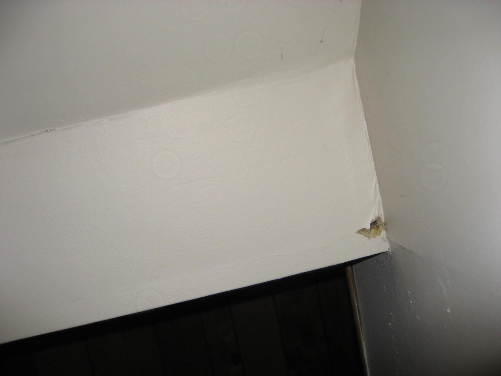 Plumbing vent (Stack) leak-221.jpg