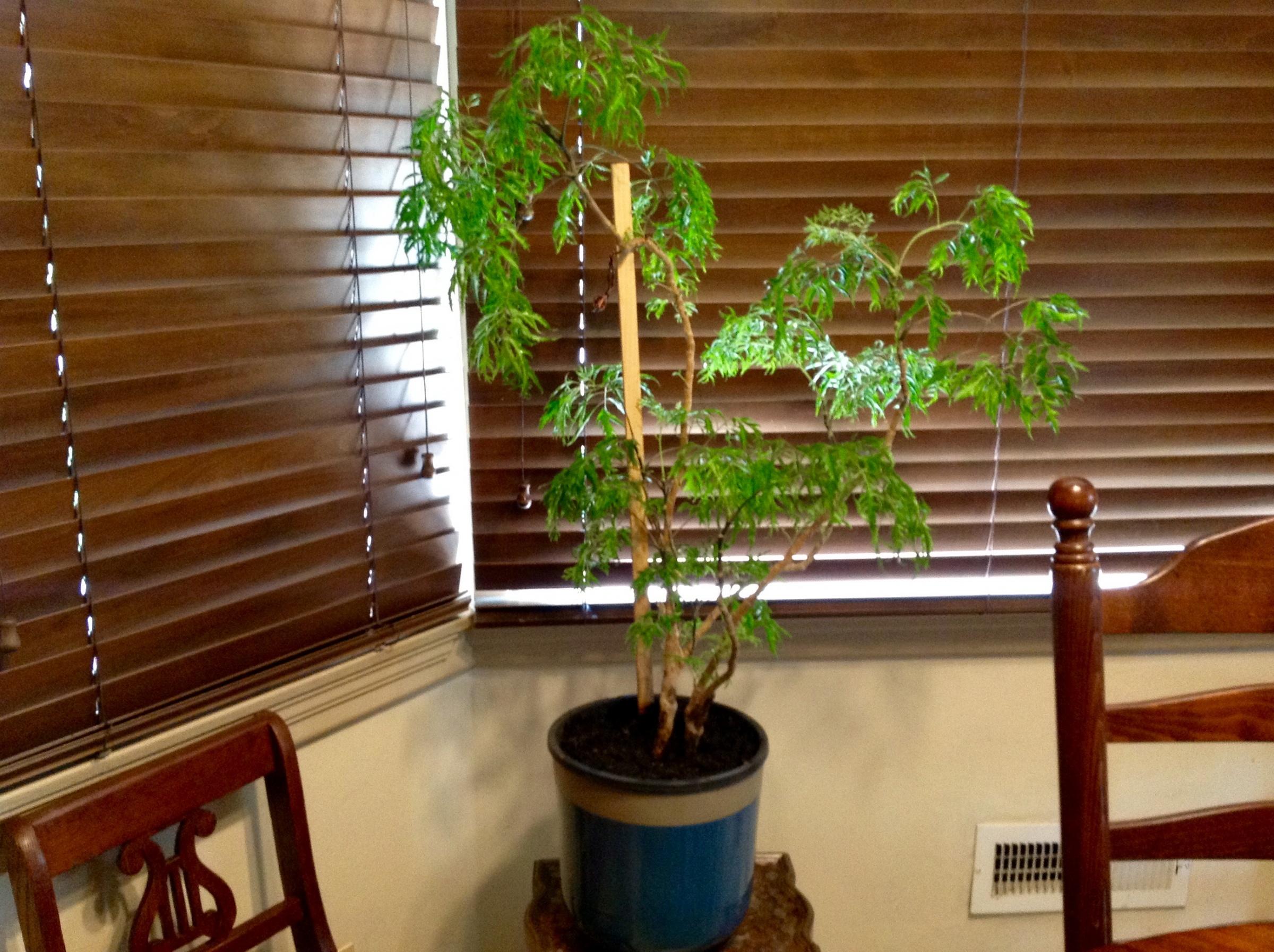 Lemon Tree update-225c478c-f445-4ff9-9753-ef5f1f9f01be.jpg