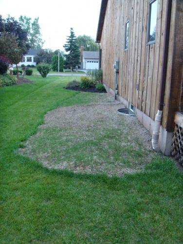 Trouble Growing Grass-3.jpg