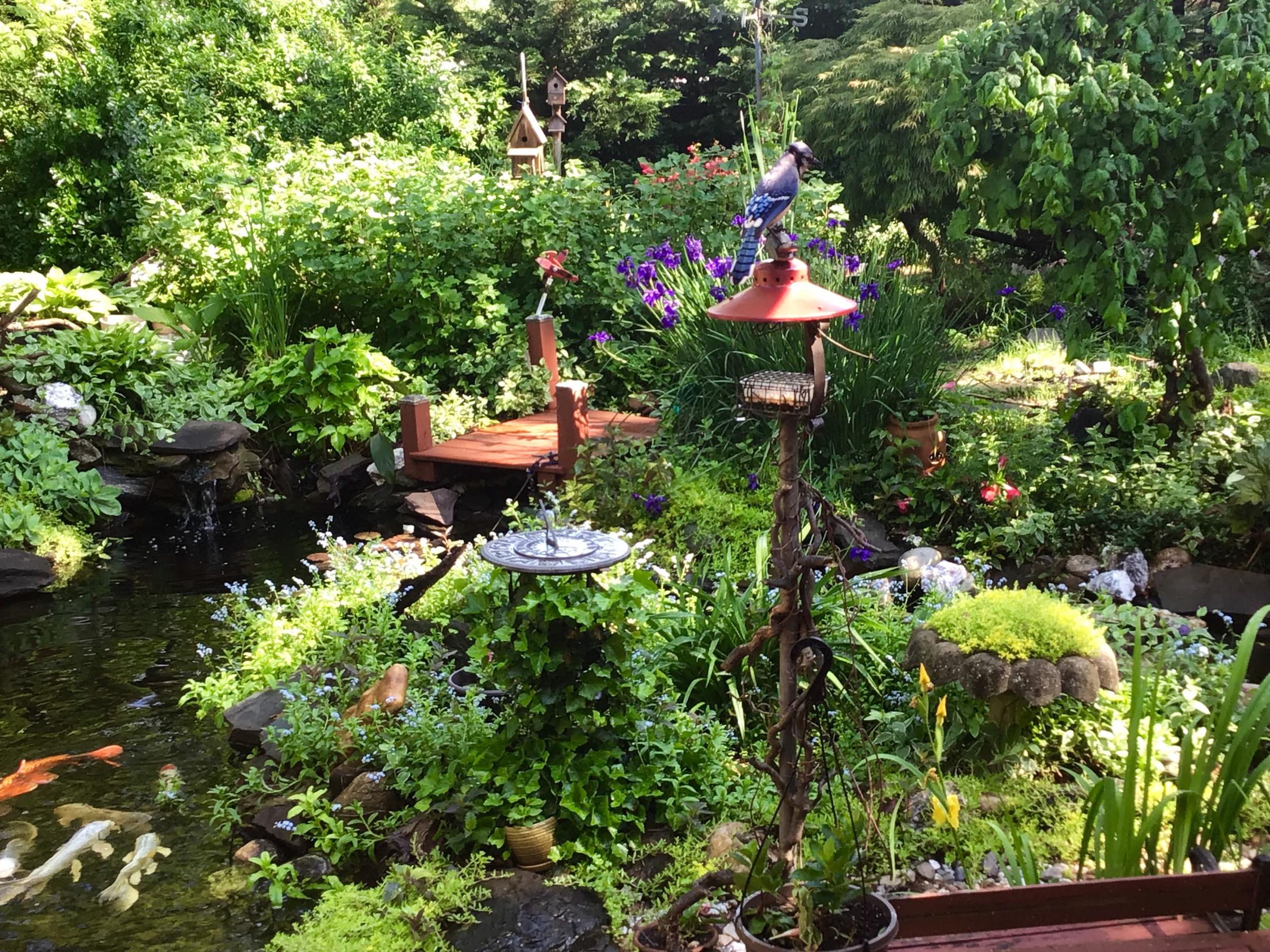 This mornings garden-3bdd83a9-8118-4c61-aebf-56cc949ec4a9.jpg