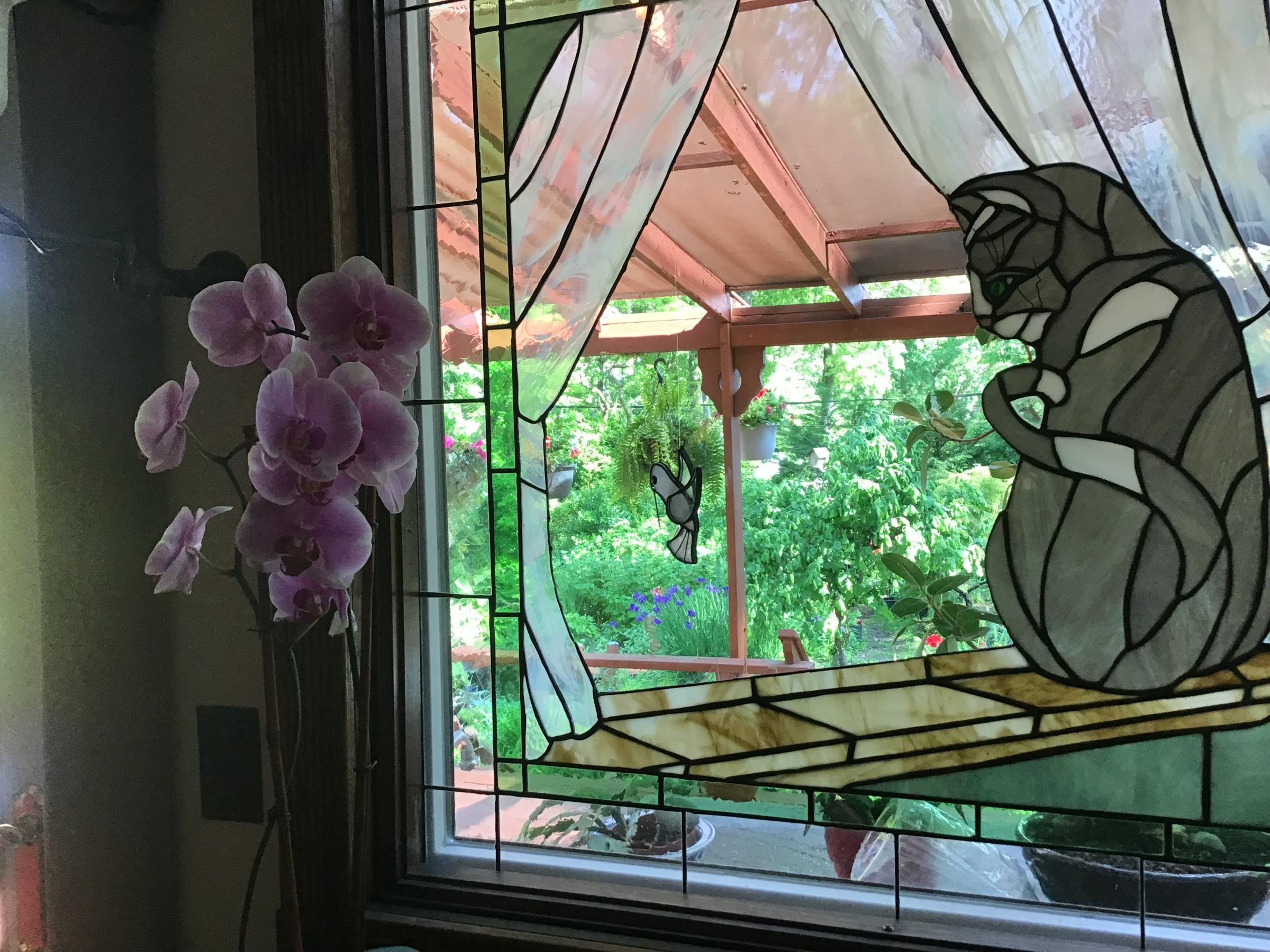 This mornings garden-51009838-4ad4-4591-bc8d-c93dc738814e.jpg