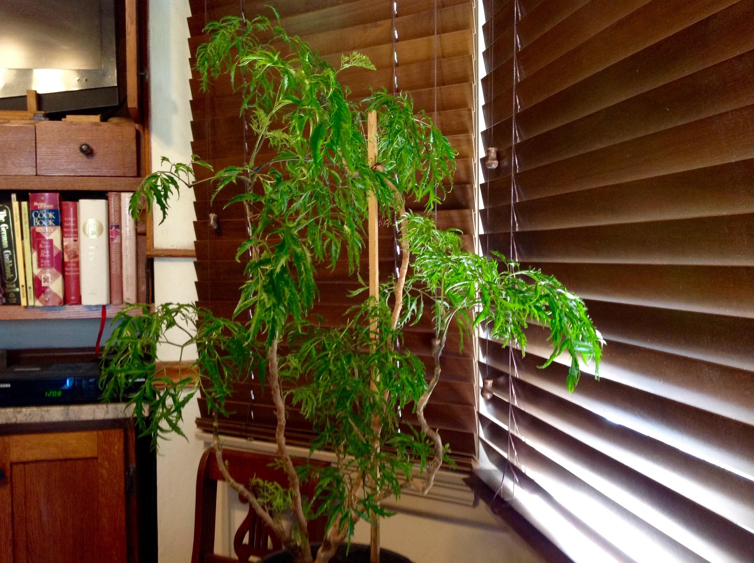 Lemon Tree update-55c4dd15-90e6-450c-a102-eea7dff917ca.jpg