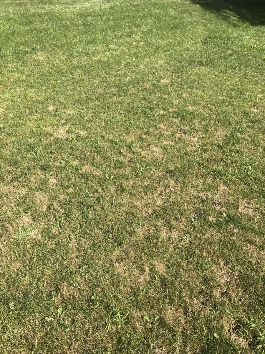 Brown spots in lawn-5797387c-224c-4138-bb7f-a1bff6aa0033_1531594667106.jpg