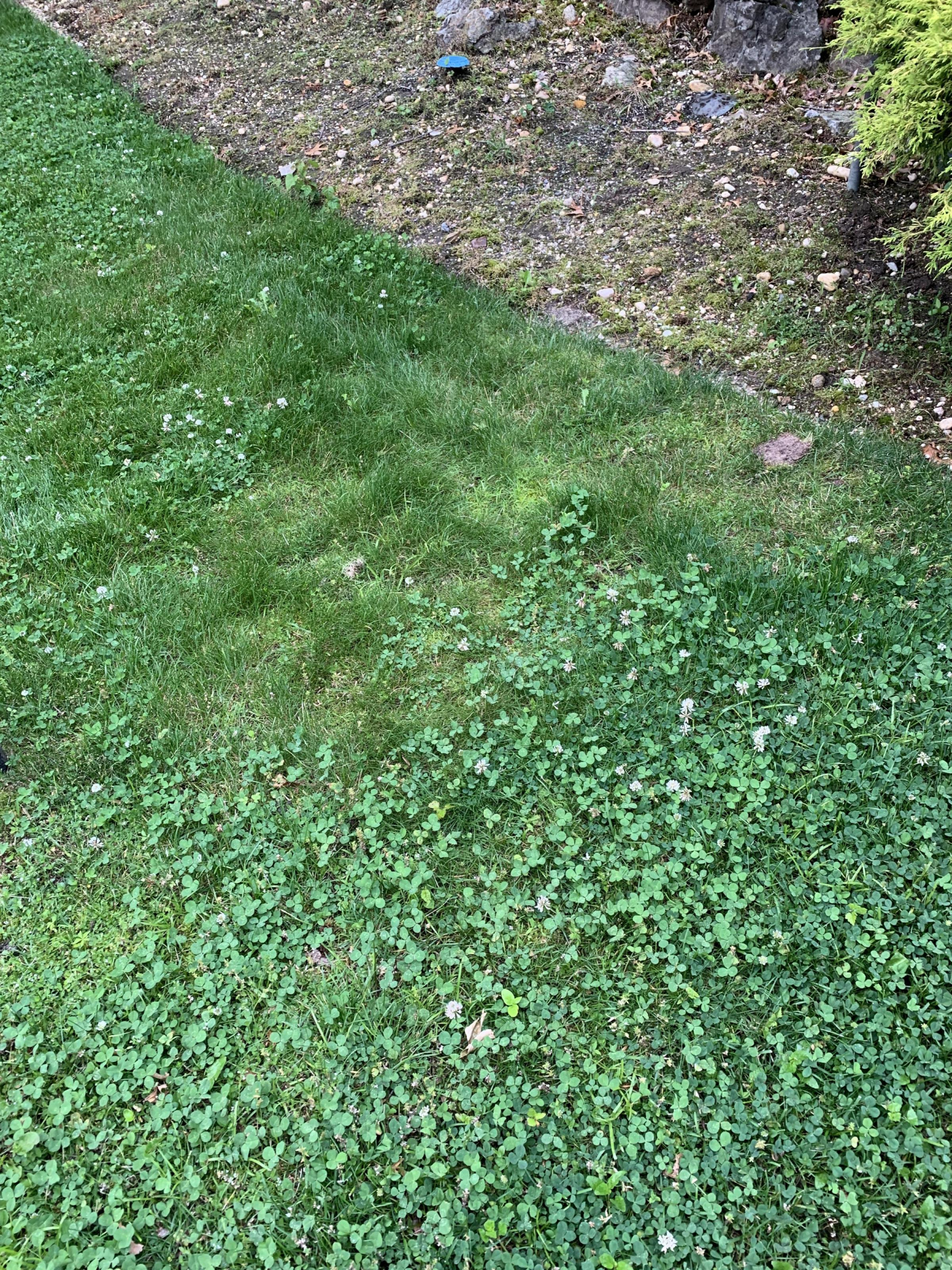 Removing this from the lawn-59bcd30d-ba1c-4c45-aa7d-922ed951085a_1560425347710.jpg