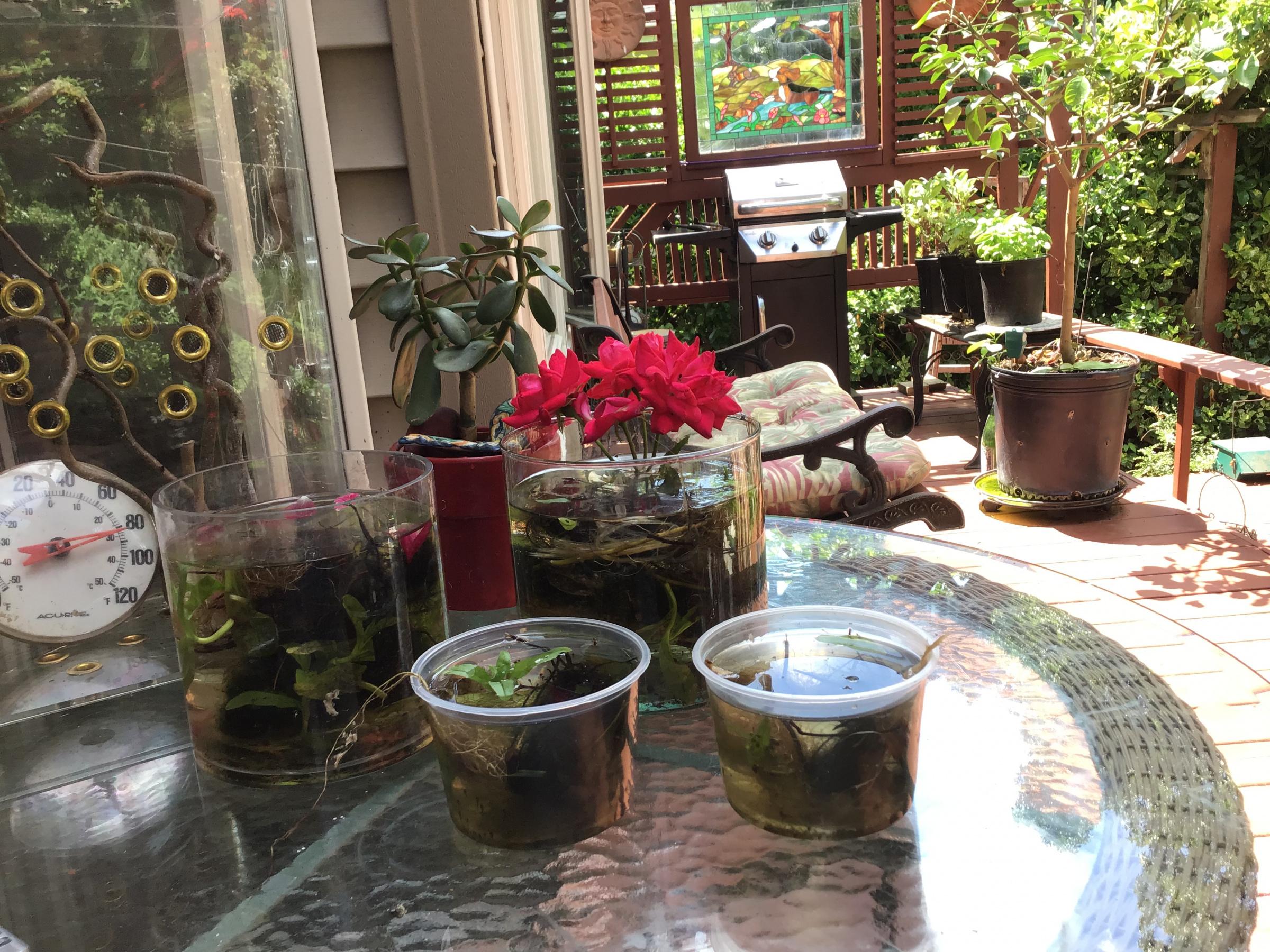 pepper pots (Pimientos)-93e93dd9-50ca-4cf8-ba61-01cf62479469.jpg