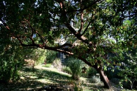 Gulf Island Building.-arbutus-trees-6-.jpg
