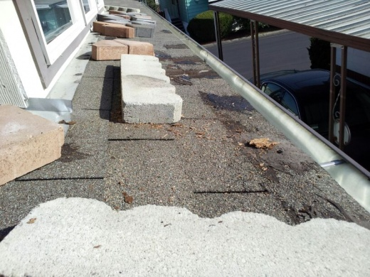 Help!!! Why do I need to replace an 8 year old roof & how correct the problem?-area-i-had-tarped-leak-around-drip-edge-i-think.jpg