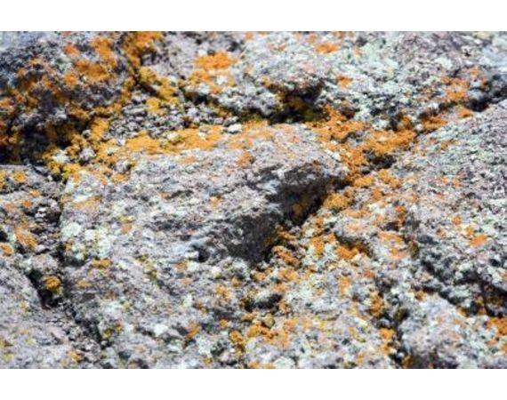 Orange dust in Attic-article-new-intro-modal_ehow_images_a07_tt_kk_identify-orange-mold-800x800.jpg