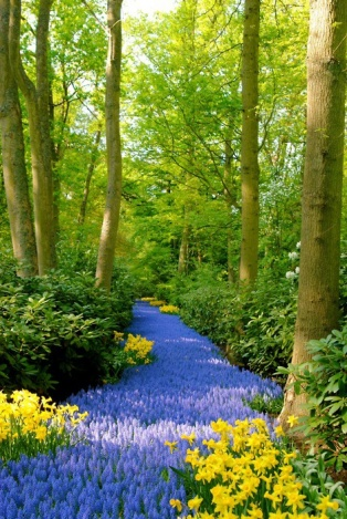 amazing paths-att00015153.jpg