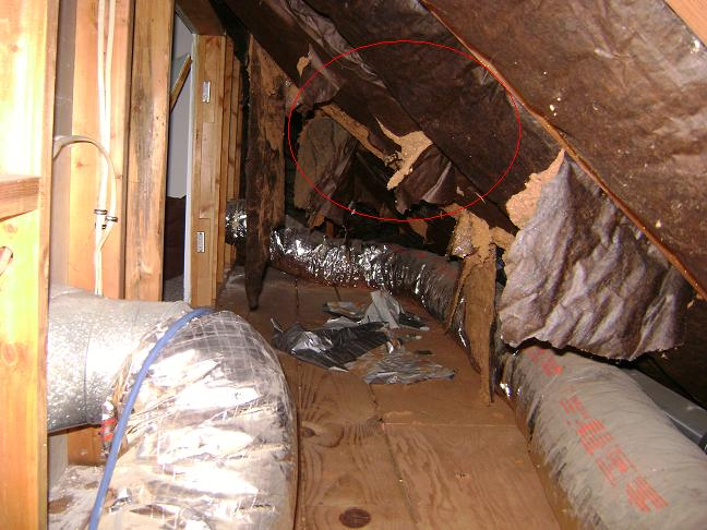 Insulating a 1 & a Half Story Cape - Help!-attic2.jpg