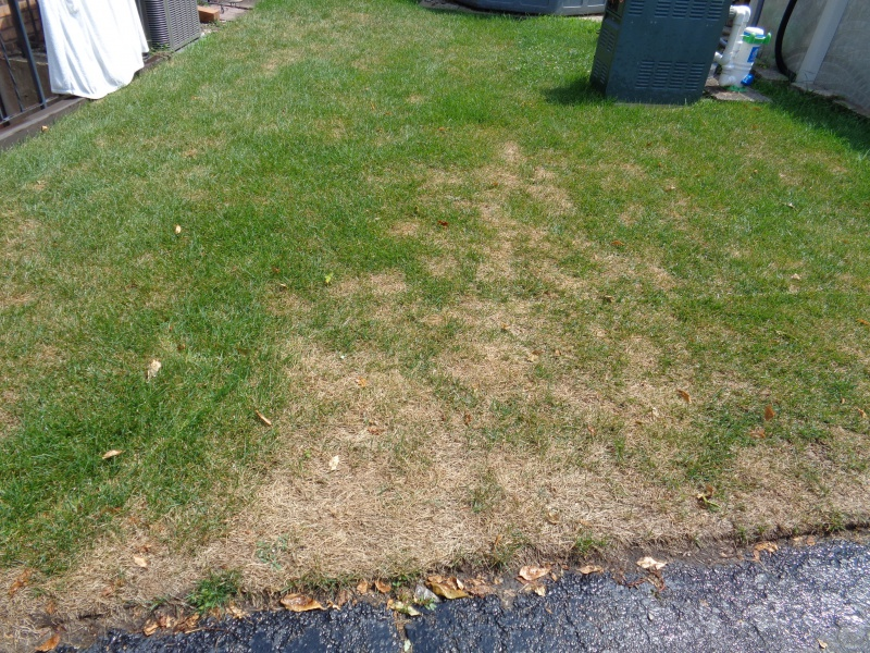 relatively new sod slowly dying in patches-aug-5-2017.jpg