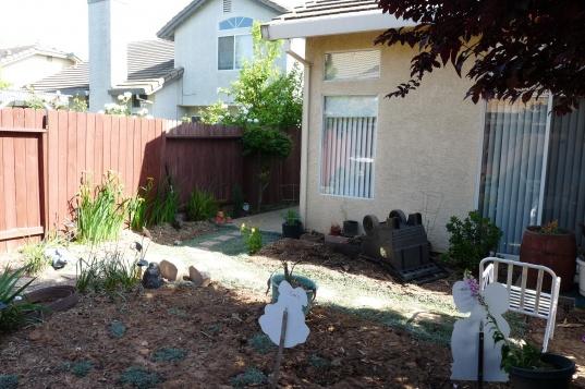 Backyard Privacy, Pergola, Lattice-back-before.jpg