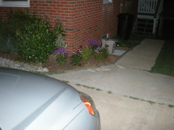 Drainage Issues-backpack-garden-039.jpg