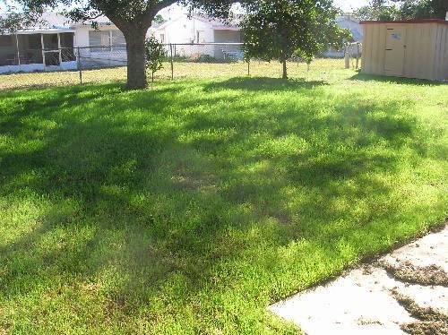 Some newer stuff-backyard.jpg