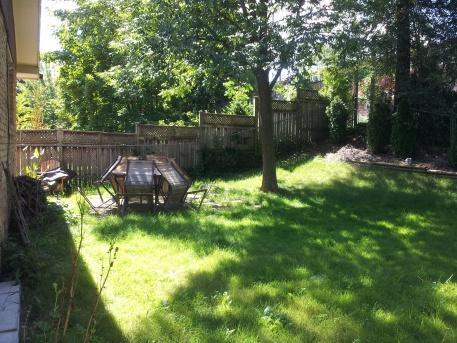 Window Wells & Grading-backyard.jpg