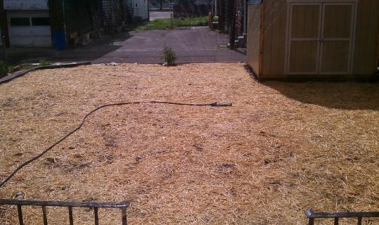 Help with my back 'yard'-backyard1.jpg