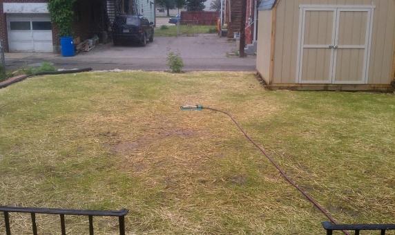 Help with my back 'yard'-backyard2.jpg