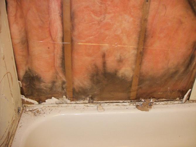 Newbie with Bathroom Mold question-bathroom-wall-tub2.jpg