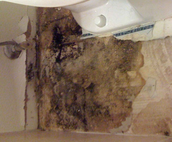 Bathroom Subfloor Replacement sealing a bathroom subfloor? - flooring - diy chatroom home