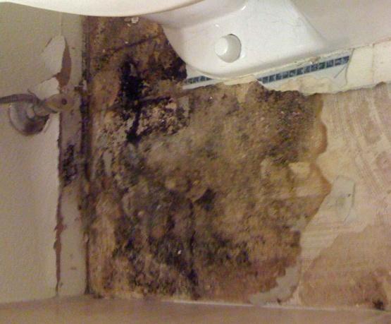 Sealing a bathroom subfloor?-behindtoilet.jpg