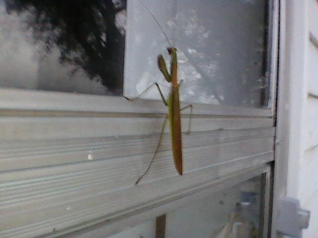 Big Bug-big-bug.jpg
