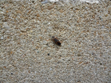 Can anyone tell me what these little buggers are?-bug-001-small-.jpg