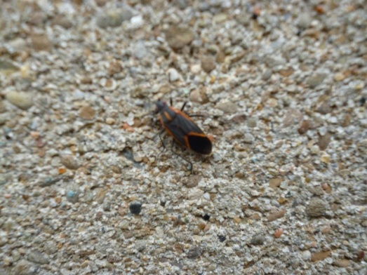 Can anyone tell me what these little buggers are?-bug-002-small-.jpg