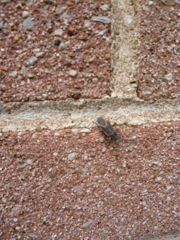 Can anyone tell me what these little buggers are?-bug-003-small-.jpg