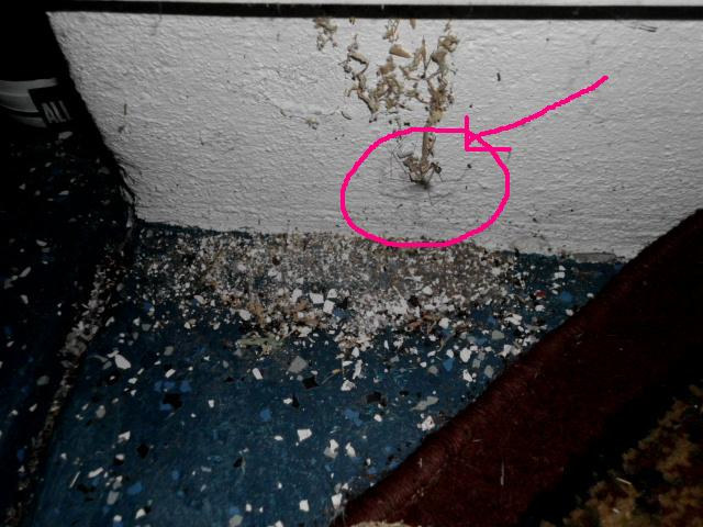 Are they (tiny spiders) causing this destruction?-bugs-002.jpg