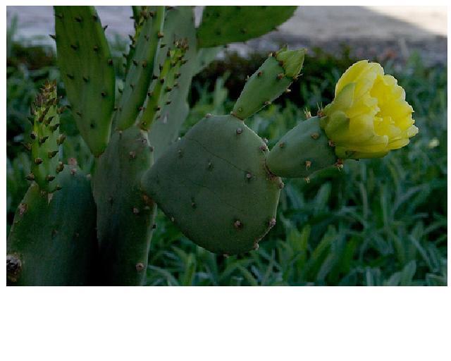 When to trim cactus-cactus.jpg