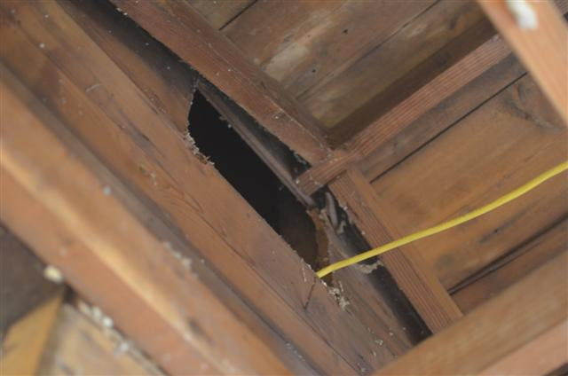 My breezeway and garage have 2x4 rafters :(-cake-004-small-.jpg