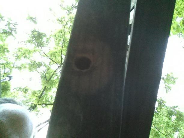 Wood boring wasp?-cam00201.jpg