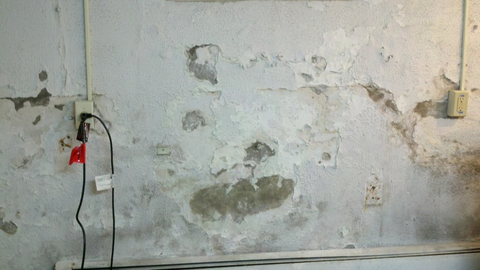 Need Advice Repairing Basement Walls-cellar2.jpg