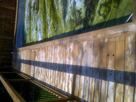 Cedar Deck Stain Failure - Sand or Strip?-chatham-kent-20130501-01548.jpg